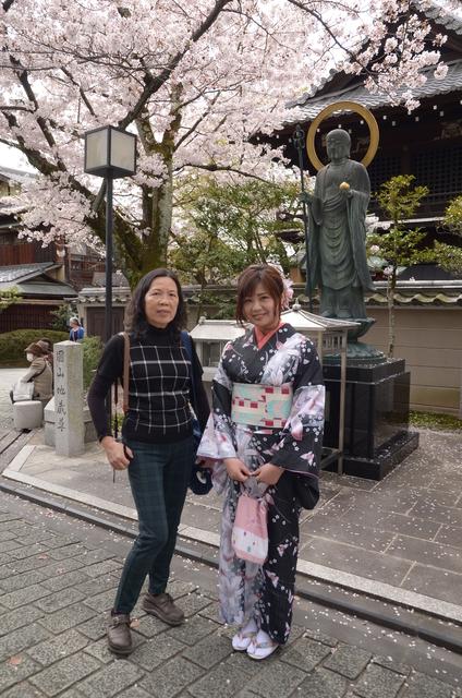 DSC_0785.JPG - 20160406-和櫻和服體驗、清水寺、祇園夜櫻