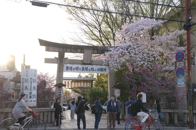 DSC_1022.JPG - 20160406-和櫻和服體驗、清水寺、祇園夜櫻