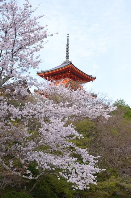 DSC_1002.JPG - 20160406-和櫻和服體驗、清水寺、祇園夜櫻