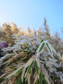 2012大霸雪季:IMG_0611-800.jpg