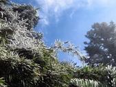 2012大霸雪季:IMG_0628-800.jpg