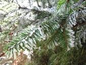 2012大霸雪季:IMG_0626-800.jpg