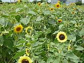 2009-6-20-梅岡區&梅英區郊遊:P1000363.jpg