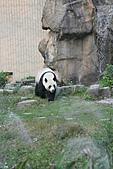 【'11-0228】動物園之叁:IMG_5948.JPG