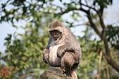 【'11-0228】動物園之叁:IMG_5626.JPG