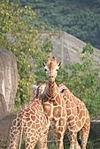 【'11-0228】動物園之叁:IMG_5858.JPG