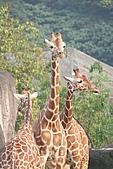 【'11-0228】動物園之叁:IMG_5861.JPG