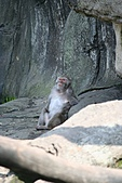 【'11-0228】動物園之叁:IMG_5638.JPG