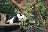 【'11-0228】動物園之叁:IMG_5959.JPG