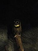【′11-0228】動物園:DSC05051.JPG