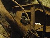 【′11-0228】動物園:DSC05053.JPG