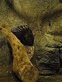 【′11-0228】動物園:DSC05063.JPG