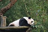 【'11-0228】動物園之叁:IMG_5963.JPG
