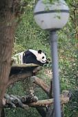 【'11-0228】動物園之叁:IMG_5966.JPG