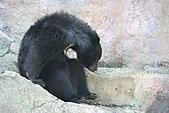 【'11-0228】動物園之叁:IMG_5589.JPG