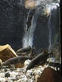 【′11-0228】動物園:DSC05072.JPG