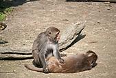 【'11-0228】動物園之叁:IMG_5595.JPG