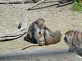 【′11-0228】動物園:DSC04961.JPG