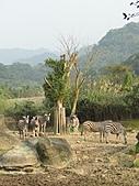 【′11-0228】動物園:DSC05089.JPG