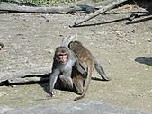 【′11-0228】動物園:DSC04962.JPG