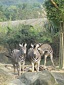【′11-0228】動物園:DSC05090.JPG