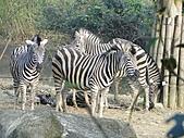 【′11-0228】動物園:DSC05094.JPG