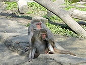 【′11-0228】動物園:DSC04963.JPG