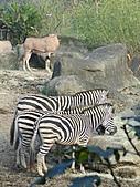 【′11-0228】動物園:DSC05095.JPG