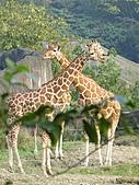 【′11-0228】動物園:DSC05096.JPG