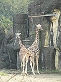 【′11-0228】動物園:DSC05097.JPG