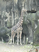 【′11-0228】動物園:DSC05098.JPG