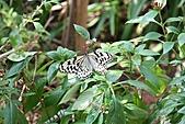 【'11-0228】動物園之叁:IMG_5665.JPG