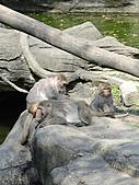 【′11-0228】動物園:DSC04964.JPG