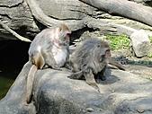 【′11-0228】動物園:DSC04965.JPG