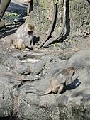 【′11-0228】動物園:DSC04966.JPG