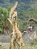 【′11-0228】動物園:DSC05105.JPG