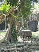 【′11-0228】動物園:DSC04952.JPG