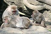 【'11-0228】動物園之叁:IMG_5603.JPG