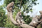 【'11-0228】動物園之叁:IMG_5617.JPG