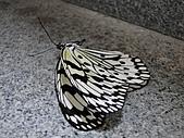 【′11-0228】動物園:DSC04976.JPG