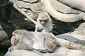 【'11-0228】動物園之叁:IMG_5600.JPG