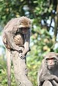 【'11-0228】動物園之叁:IMG_5618.JPG