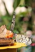 【'11-0228】動物園之叁:IMG_5674.JPG