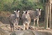【'11-0228】動物園之叁:IMG_5839.JPG