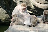 【'11-0228】動物園之叁:IMG_5601.JPG