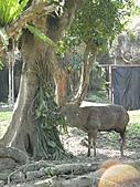 【′11-0228】動物園:DSC04953.JPG