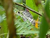 【′11-0228】動物園:DSC04986.JPG