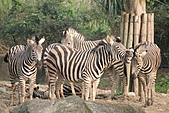 【'11-0228】動物園之叁:IMG_5844.JPG