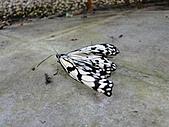 【′11-0228】動物園:DSC05001.JPG