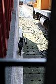 【'11-0305】我在侯硐第二彈之貳:IMG_3005.JPG